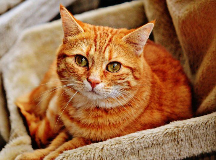 poils de chat